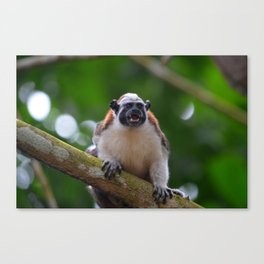 Titi monkey Canvas Print