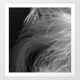 Feather Gradient II Art Print