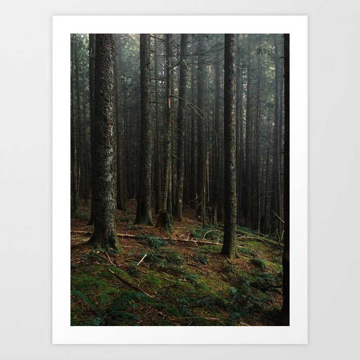 Gorge Woods Art Print