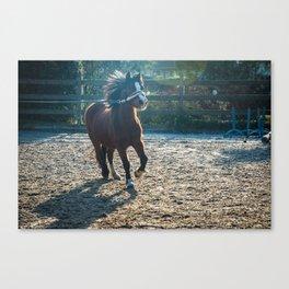 Foal Poulain Canvas Print
