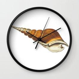 Spiral Shell Wall Clock