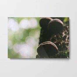 Forest, Kejimkujik Metal Print