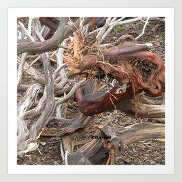 TEXTURES - Manzanita Drought Conditions #4 Art Print