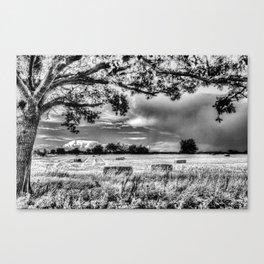 The Farm Tree  Canvas Print