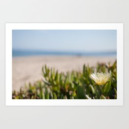 Blooming succulent ground cover on Californian beach Art Print