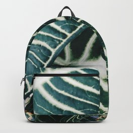 glass house adventure Backpack