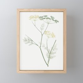 Fennel flowering plant from La Botanique de J J Rousseau by Pierre-Joseph Redoute (1759-1840) Framed Mini Art Print