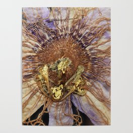 Lavender Passion Flower Detail with 22kt Gold Poster