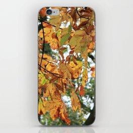 Horse Chestnut Conker Tree Fall iPhone Skin
