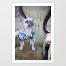 Rufus 4 Art Print