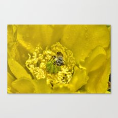 Rainy Day Cactus Flower Bee Canvas Print