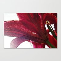ruby Canvas Prints featuring Ruby by Dominique Gwerder
