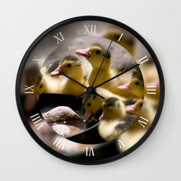 Yellow Muscovy ducklings drink water Wall Clock