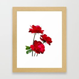Roses are red, really red! Framed Art Print