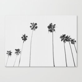 Black & White Palms Canvas Print
