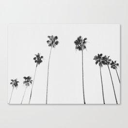 Black & White Palms Leinwanddruck