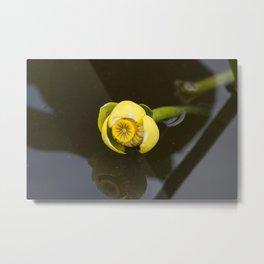 Everglades Flower Metal Print