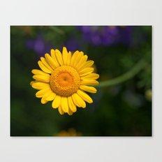 Yellow Daisy 4217 Canvas Print