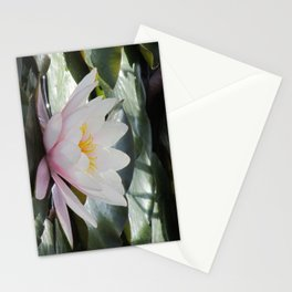 sea rose Stationery Cards