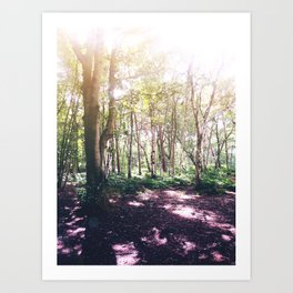 Forest Glare Art Print