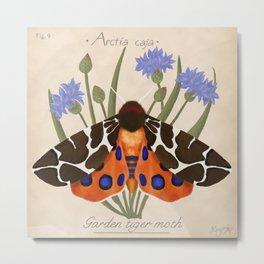 Tiger Moth and Cornflowers Metal Print