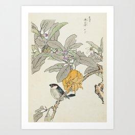 Fingered Citron and Bullfinch Japanese Bird Print, Imao Keinen, 1891 Art Print