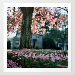 Trumpet Tree in Full Bloom (Tabebuia) Art Print