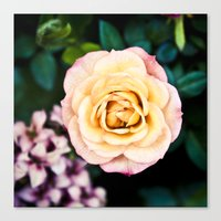 peach Canvas Prints featuring peach by dgpmiami