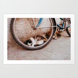 Cat at Bicycle at Moroccan street at the Medina Marrakesh - Photo Print - Travel photography Art Print