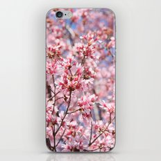 Cherry Blossom Blooms for Spring iPhone & iPod Skin