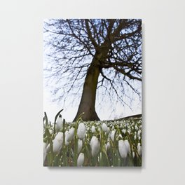 Snowdrops in Spring Metal Print