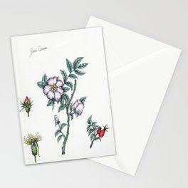 Plants & Herbs Edition Stationery Cards