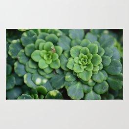 Summer Succulents Rug