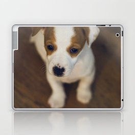 Little puppy dog Laptop & iPad Skin