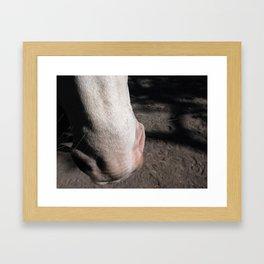 Nosey Horsey Framed Art Print