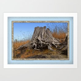 WEATHERED STUMP AND ROOTS ON BEACHSIDE BLUFF Art Print