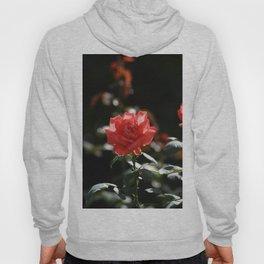 Sunny rose Hoody