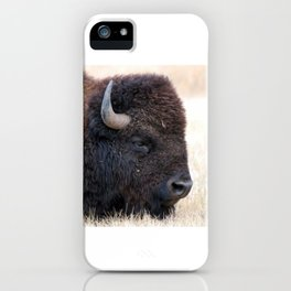 Buffalo Bison Up Close iPhone Case