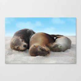 Sea lions family sleeping together on beach Canvas Print