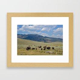 Roaming Bison Framed Art Print