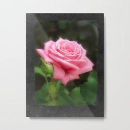 Pink Roses in Anzures 3 Blank P4F0 Metal Print