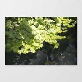 Longwood Gardens - Spring Series 262 Canvas Print