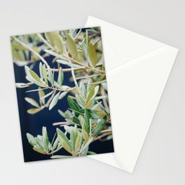 Photo of a Mediterranean Olive Tree II, in Trastevere Rome, Italy | Fine Art Travel Photography |  Stationery Cards