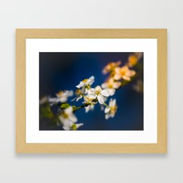 Beautiful White Jasmine Flowers With Green Leaves Against A Blue Background Framed Art Print