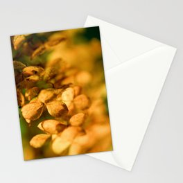 Hydrangea Detail in Autumn - Warm Colorful Flower Print - Macro Photography Mixed -Colored Wall Art Stationery Cards