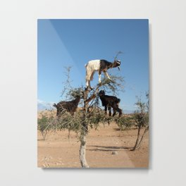 Funny goats in a tree  Metal Print