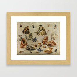 "Jan van Kessel de Oude ""Seashells, butterflies, flowers and insects"" Framed Art Print"