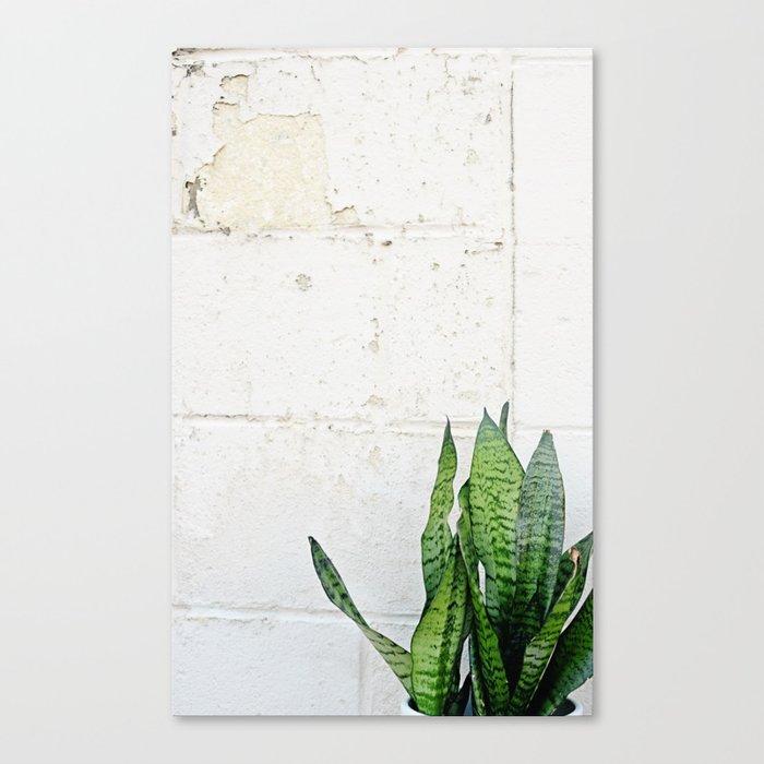 snake plant Canvas Print