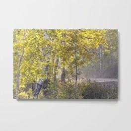 Through the Aspen Forest Metal Print