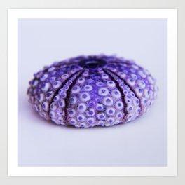 purple urchin Art Print